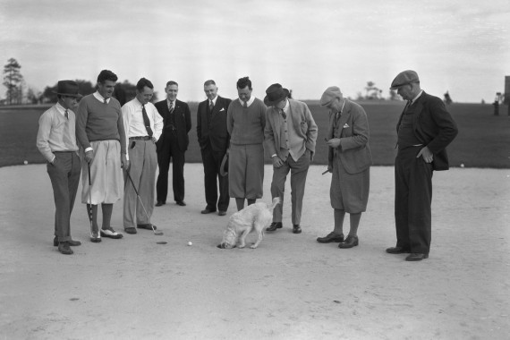 HEM8678 Golf Dog retrieving ball1933  (2)